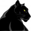 Panther Digital Marketing