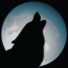 MoonDog Web Hosting and Design